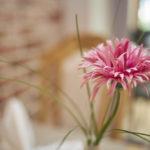 Blume Flair Hotel Neeth