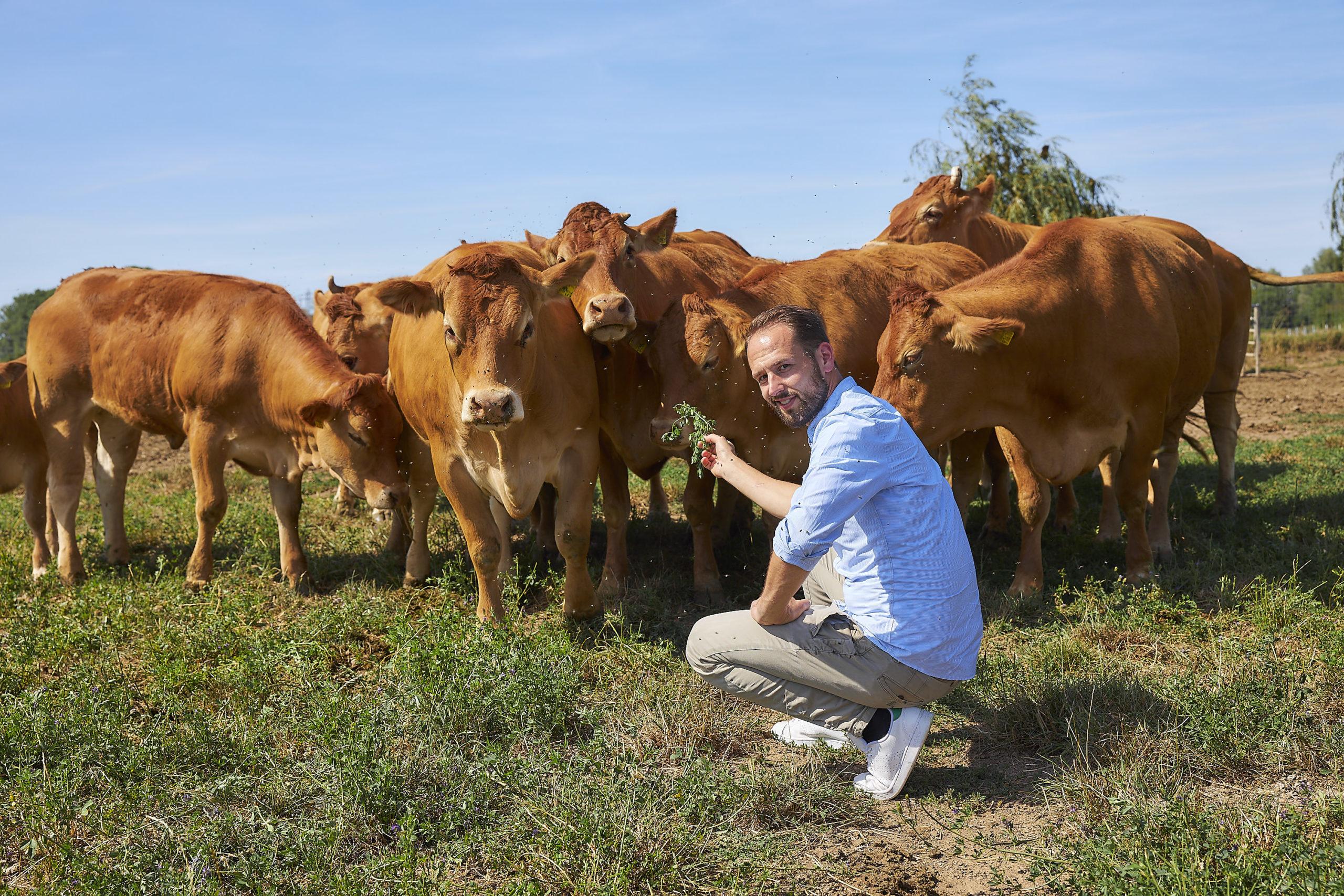 Alexander Erck mit Kühe