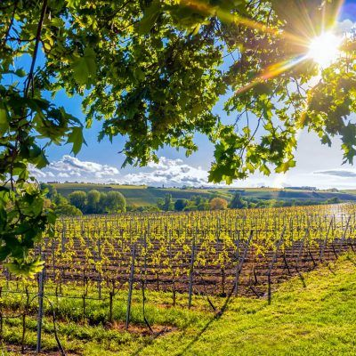 Franconian vineyards