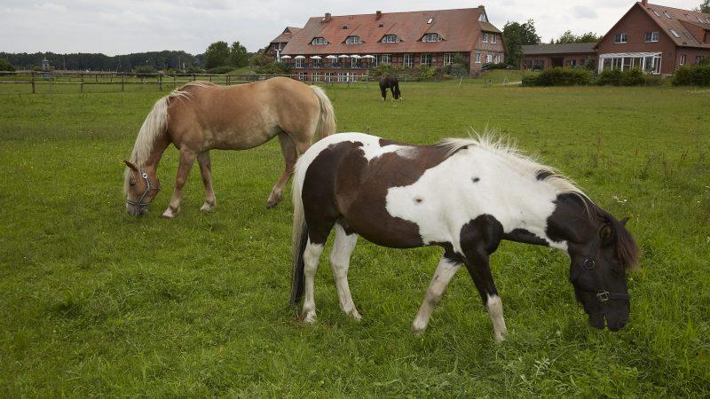 Zielow Pferde