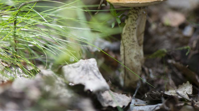 Schwarzatal Waldfrieden