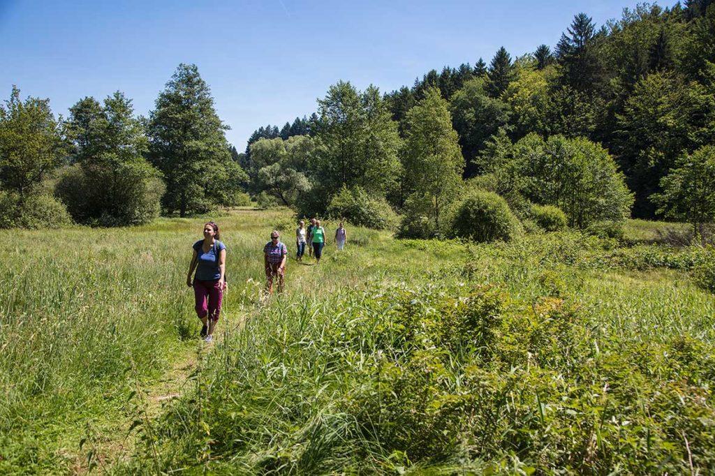 Wanderer wandern durch den Spessart