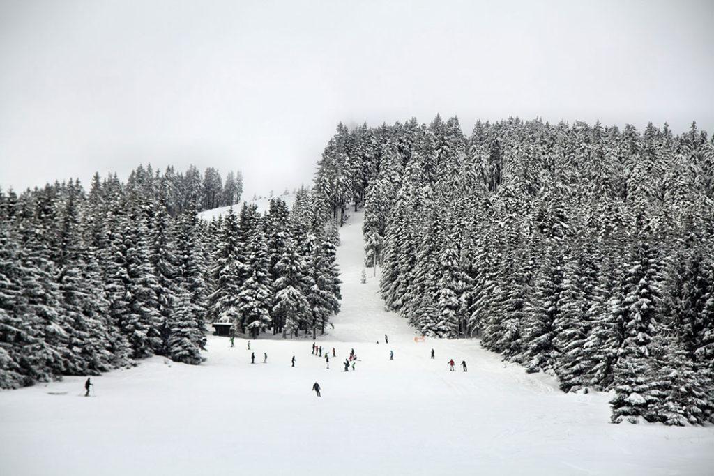 Abfahrtski in Braunlage im Harz