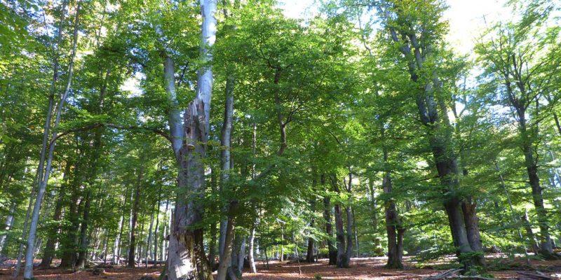 Naturschutzgebiet Rohrberg