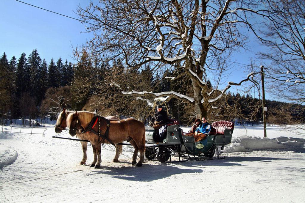Pferdeschlittenfahrt in Braunlage im Harz