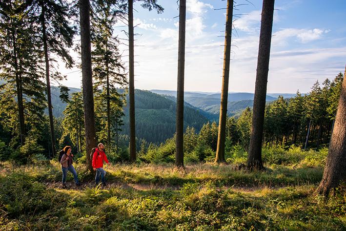 Wanderer auf dem Rothaarsteig der von Brilon im Sauerland bis nach Dillenburg in Hessen führt