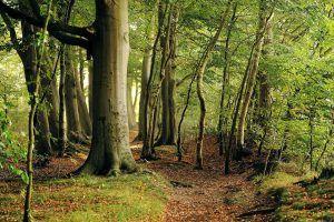 Buchenwald - Mit Holz aus der Region können Hotels umweltverträglicher heizen.