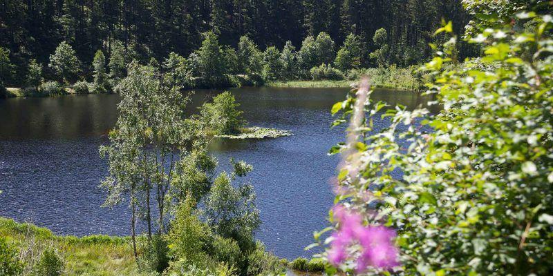 Der Sankenbachsee in Baiersbronn liegt am Seensteig und lädt zu e iner herrlichen Rast ein.