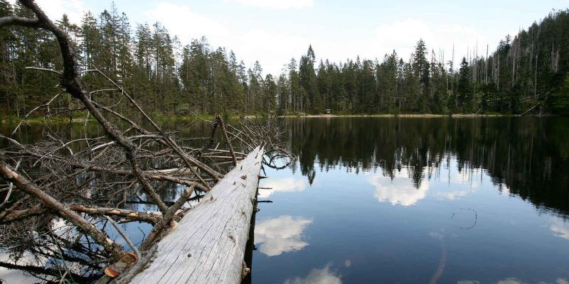 Der Wildsee in Baiersbronn liegt am Seensteig.