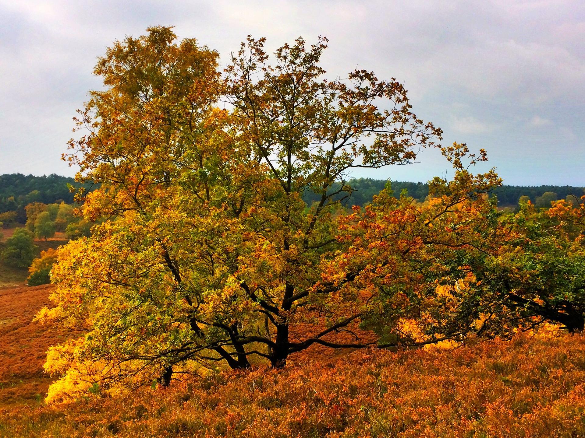 Lüneburger Heide im Herbst