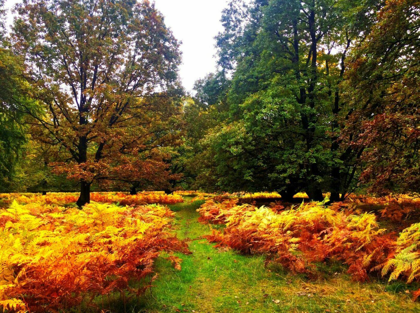 Lüneburger Weide im Herbst