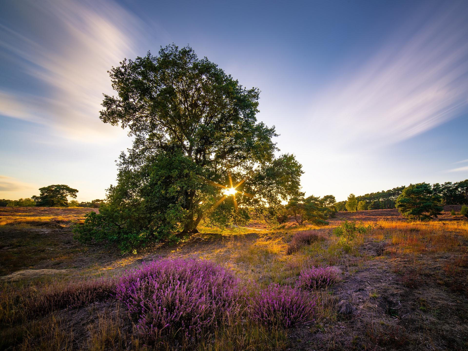 Heide Sonnenuntergang