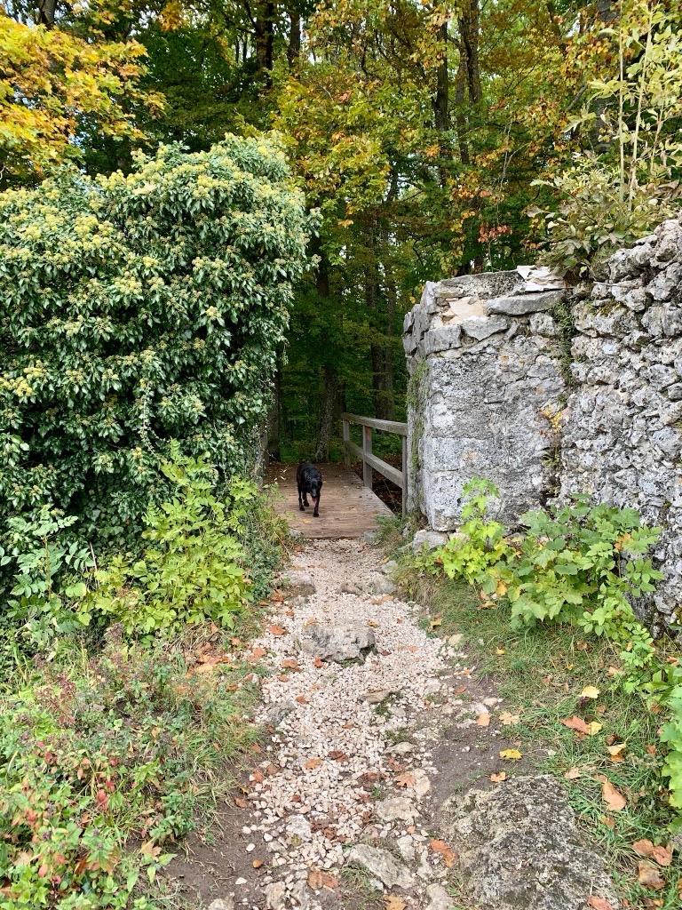 Hund auf Wanderweg
